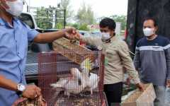 Kejari Dumai terima barang bukti hewan sitaan selundupan